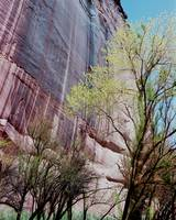 Magnesium Wall - Canyon de Chelley