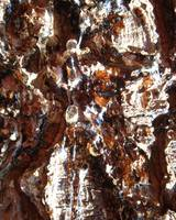 honey chrystal bark