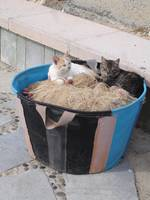 Two cats enjoying the sun and the smell of fish!