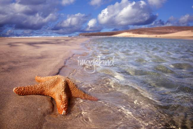 Starfish in Seascape