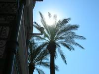 Palm Tree in the Sun