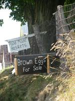 Brown Eggs and Baskets