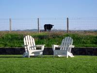 Chairs & Cow