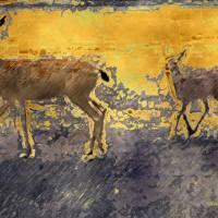 Deer Study One by Faye Cummings