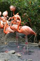 Flamingo Happy Hour