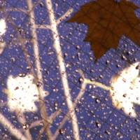 Leaves and rain 1 Art Prints & Posters by TimAllen