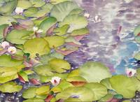 Waterlilies Collection  IX-04