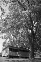 oak & chicken coop, b&w