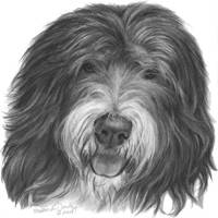 Quincy, Old English Sheepdog