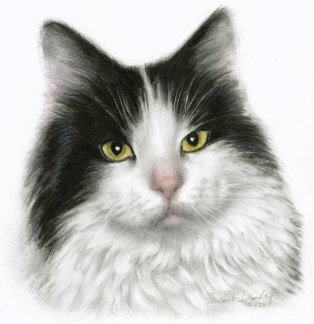Marie black white long haired cat by susan donley