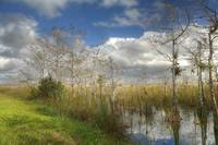 Everglades Beauty