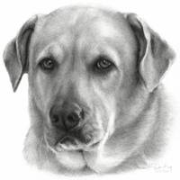 Lindsay, Yellow Labrador Mix