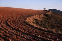 Curved Furrows