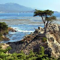 Lone Cypress Tree Art Prints & Posters by Lorrie Morrison