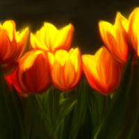 Yellow Tulips Art Prints & Posters by Anna Milakovich