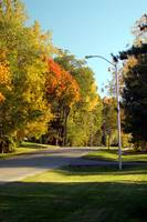 Suburbian Road in Autumn