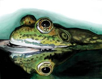 Frog by artist ferrel cordle. Giclee prints, art prints, animal art, frog art, frog in water; from an original watercolor, watercolour painting