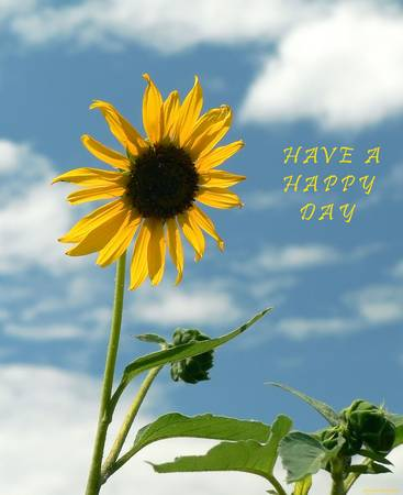 Have A Happy Day poster