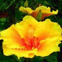 yellow sunshine by Barb Tallberg