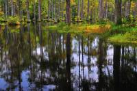 Cypress Reflections 3