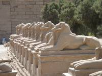 A row of Sphinxes