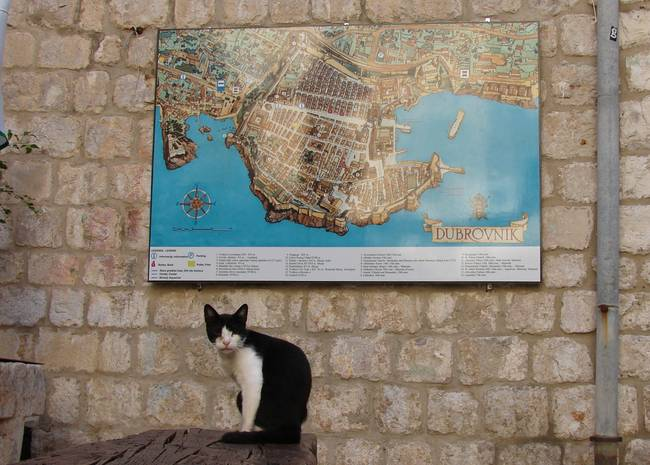 Cat in Dubrovnik, Croatia