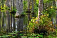 Cypress reflections 2