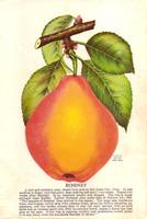 rossney pear