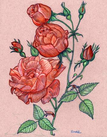 Red Roses by Cynthia Lanka