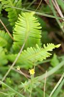 Wee yellow flower and fern