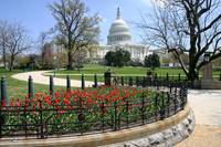US Capitol Building spring time
