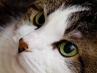 Cats eyes close-up