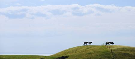 Four horses on top of the hills