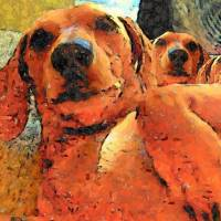 Puzzled Doxies Art Prints & Posters by Krystal Shaw