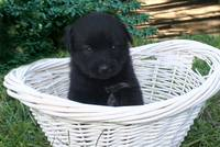 Baby Bear in basket