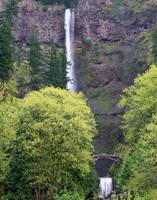Multnomah Falls With Trees