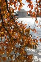 Cherry Blossom Tree and Thomas Jefferson Memorial