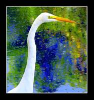 White Egret5BB