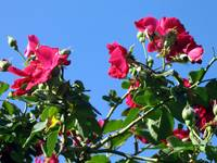 Red Roses Against Blue Sky