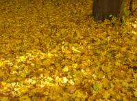 Fall Fallen Leaves