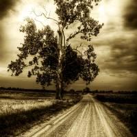 Dark Tree Art Prints & Posters by Eric Simpson