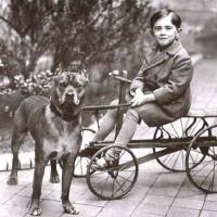 """Boy on Cart with Pitbull"" by BreedHistoryCards"