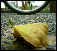 leaf and bike...