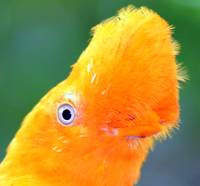 Orange  Flair