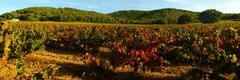 Autumn in Provence vineyard - Panoramic landscape