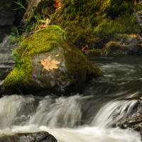 Lean on Rocks in Rapids Art Prints & Posters by Shawn H Zimmerman