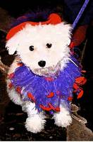 Red Hat Society Pup