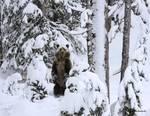 Pretending to be a Tree by Alan Sachanowski