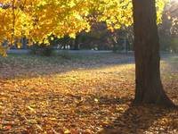 Close-up of Autumn in Prospect Park