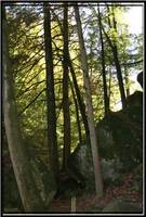 trees in the forrest Hocking Hills Ohio